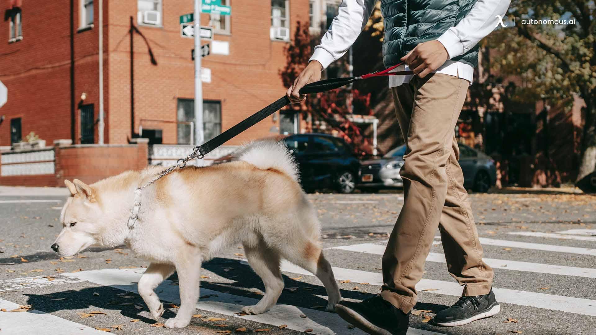 Pet sitter or dog walker