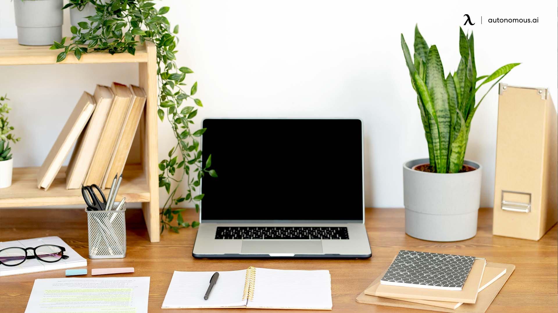 Plants for work desk decoration