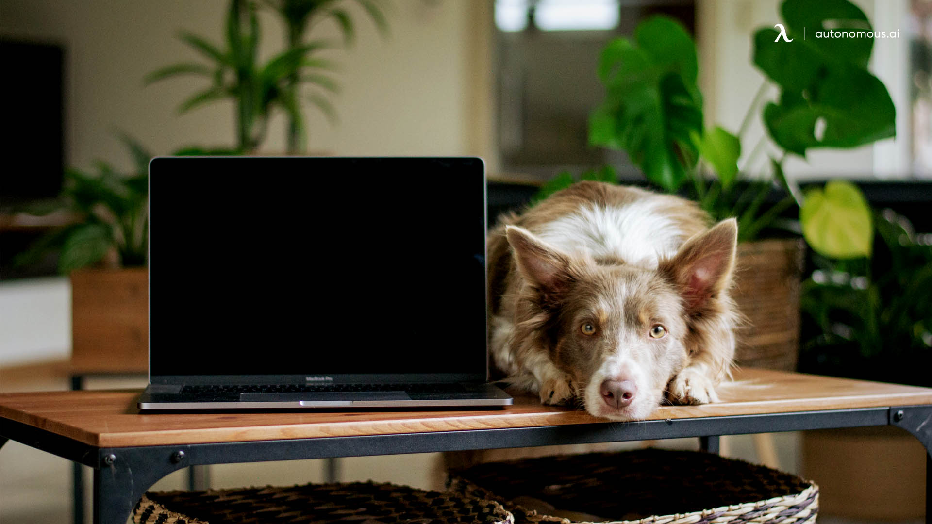 work pet desk.jpg