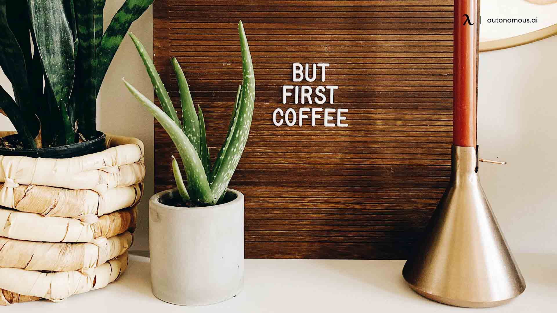10 Best Office Desk Plants That Bring the Green to Workspace
