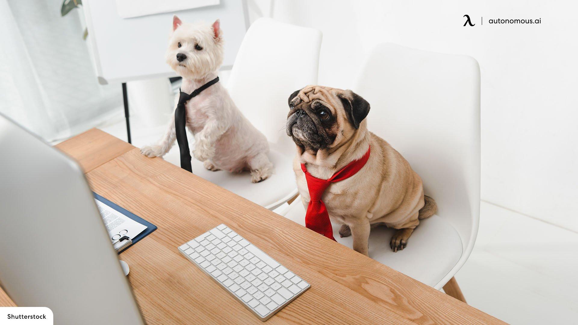Pet-Friendly Office